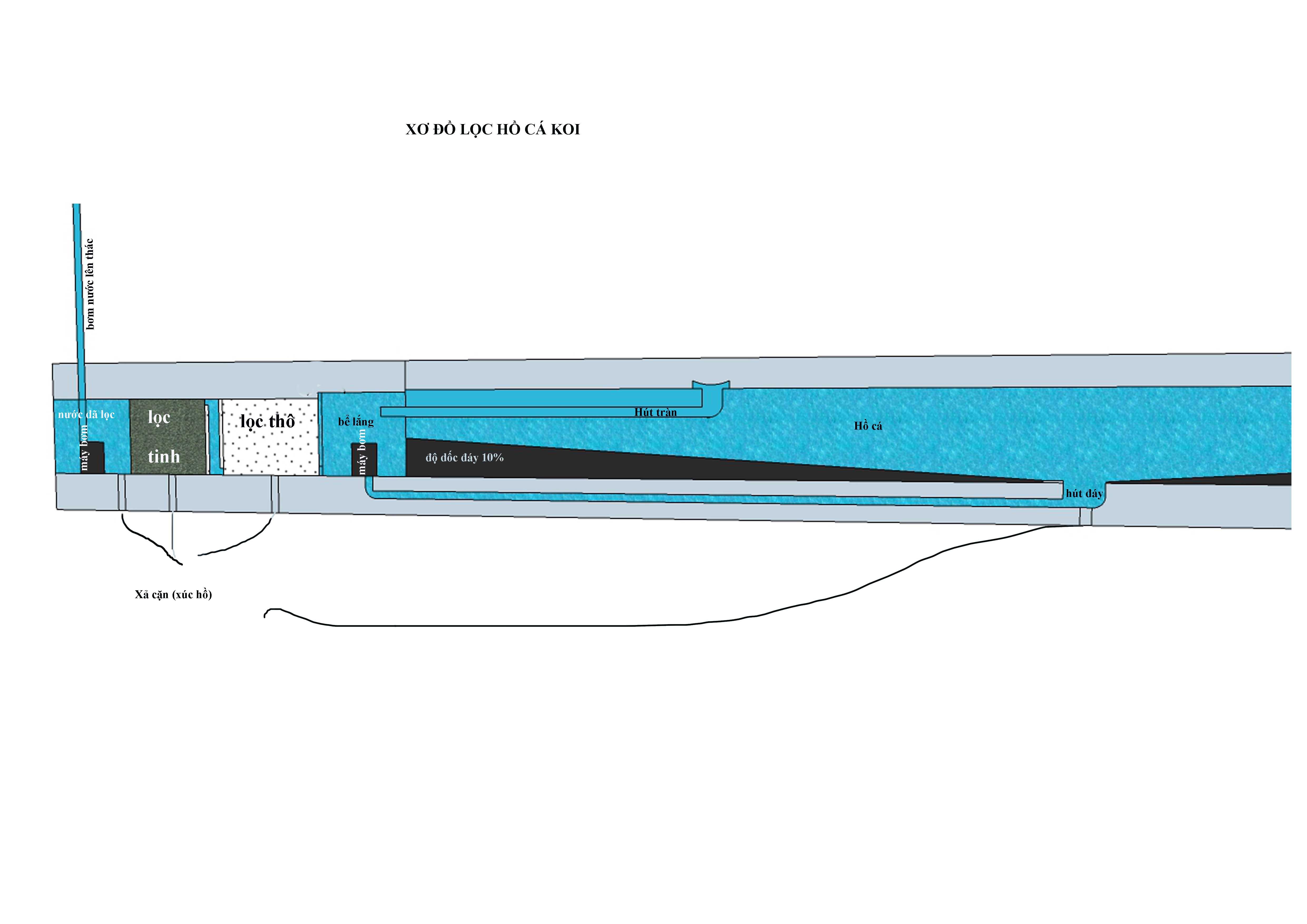 thiếtt kế hồ cá Koi tại vũng tàu